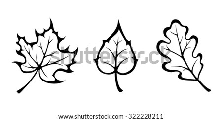 Vector black contours of autumn maple, oak and birch leaves isolated on white. - stock vector