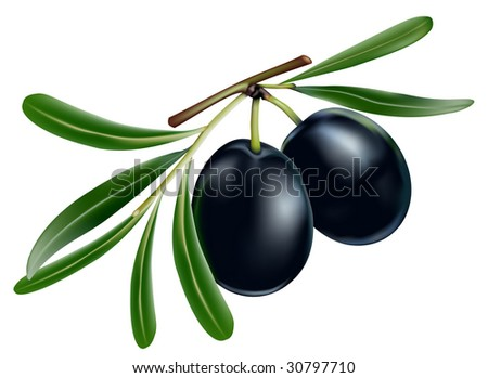 Vector black olives with leaves on white background