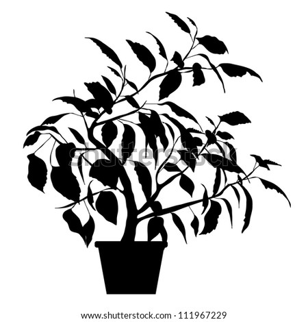 Vector Black Silhouette of Hibiscus Tree Isolated on white background - stock vector
