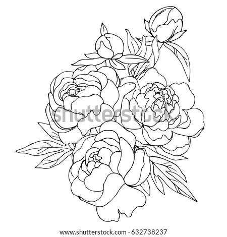 Vector black white contour simple sketch stock vector 632738237 vector black white contour simple sketch of peony flowers mightylinksfo