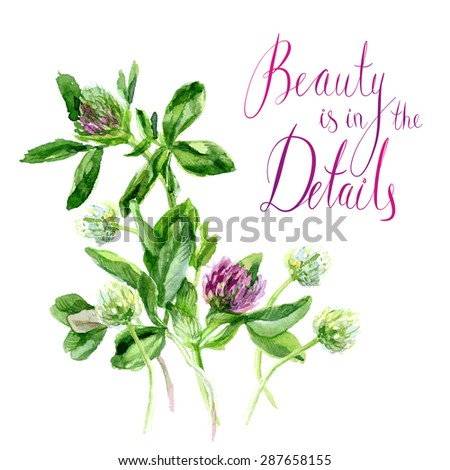 Vector botanical watercolor sketches of red clover - stock vector