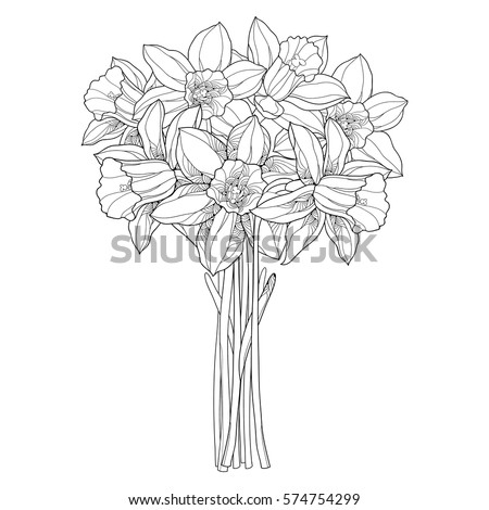 vector bouquet with outline narcissus or daffodil flowers in black isolated on white ornate floral