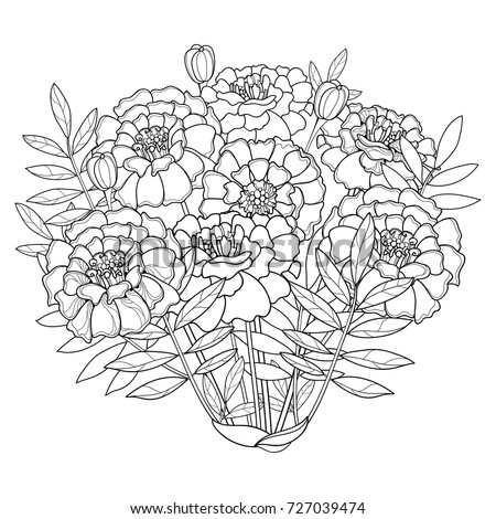 Vector Bouquet Tagetes Marigold Flower Bud 스톡 벡터 727039474 ...