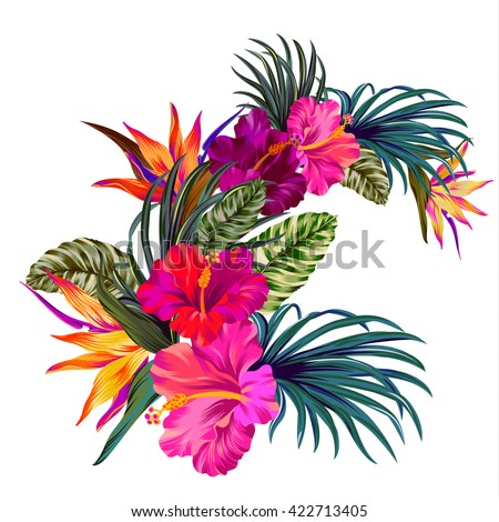tropical flowers stock images, royaltyfree images  vectors, Beautiful flower