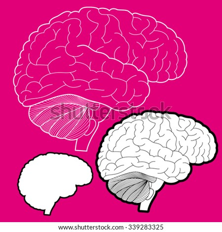Vector brain line illustration and icon - stock vector