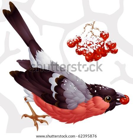 Vector bullfinch and ashberry - stock vector
