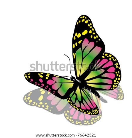 vector butterfly - stock vector