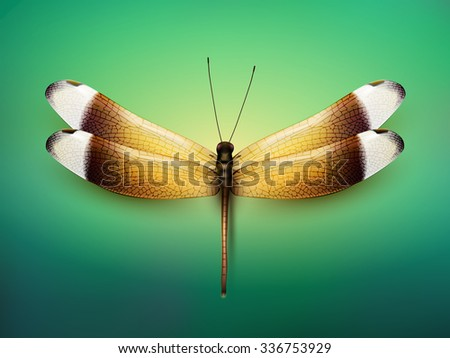 vector butterfly illustration - stock vector