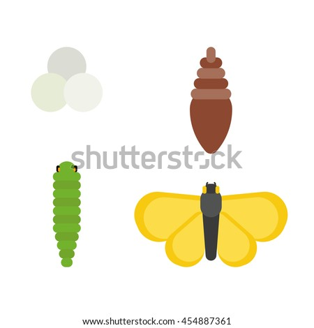 Vector butterfly life cycle icon concept