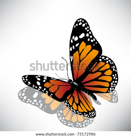 vector butterfly of orange color - stock vector