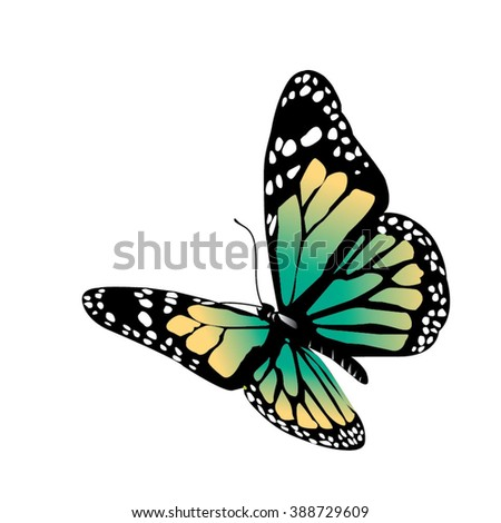 Vector butterfly on a white background - stock vector