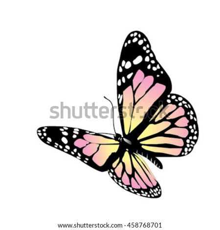 Vector butterfly on a white background