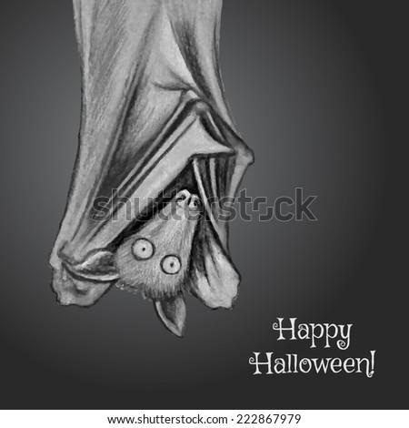 Bat Hanging Upside Down Wings Open Bat Hanging Upside Down