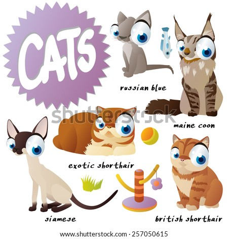 vector cartoon cat set breeds: russian blue, maine coon, siamese, exotic shorthair, british shorthair - stock vector