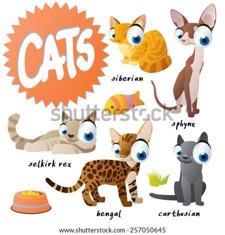 vector cartoon cat set breeds: sphinx, siberian, carthusian, bengal, selkirk rex - stock vector