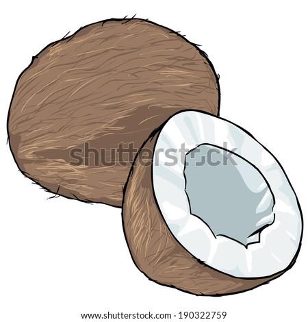 Vector Cartoon Coconut - stock vector
