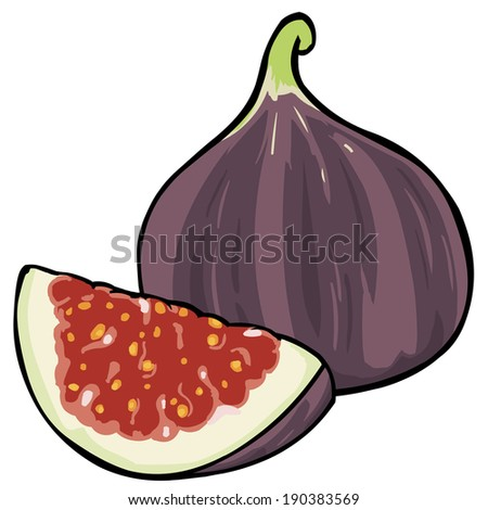 Vector Cartoon Fig - stock vector