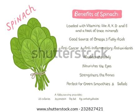 vector cartoon hand drawn spinach health benefits illustration - stock vector