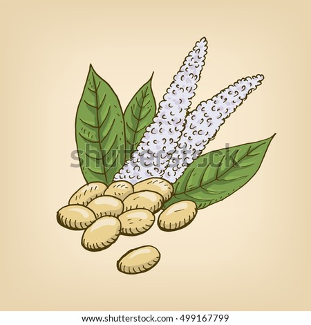 Vector cartoon illustration with amaranth seeds and flower. Hand drawn illustration.