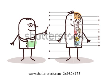 vector cartoon male anatomy lesson - stock vector