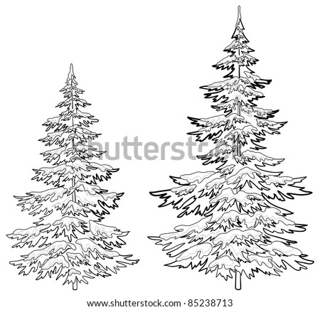 Vector, christmas trees under snow on a white background, contours - stock vector