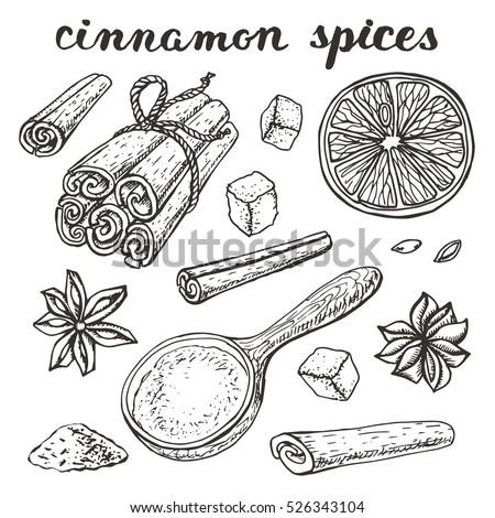 vector cinnamon spicesvinyage hand drawn doodle stock