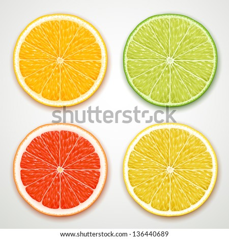 vector citrus slices - stock vector