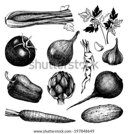 Vector collection of black ink hand drawn vegetables. Vintage healthy food illustration isolated on white - stock vector