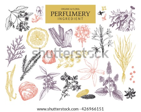Vector collection of hand drawn perfumery materials and ingredients. Vintage set of aromatic plants for perfumes and cosmetics. - stock vector