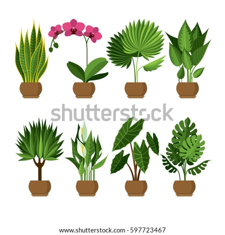Vector Collection Indoor House Plants Pots Stock Vector 597723467    Shutterstock