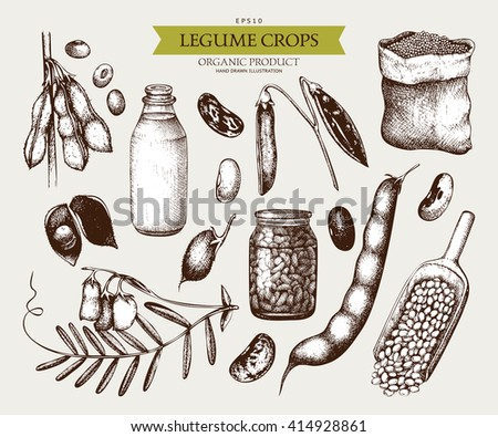 Vector collection of ink hand drawn legume crops sketches. Vintage set of legumes and legume products. Farm fresh and organic food illustration - stock vector