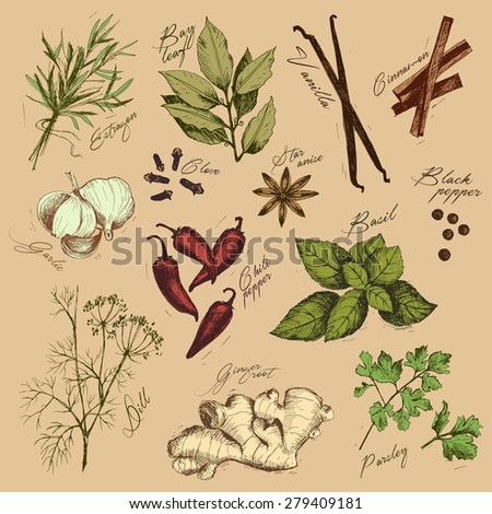Vector collection of ink hand drawn spices and herb. - stock vector