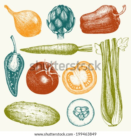 Vector collection of  ink hand drawn vegetables. Vintage healthy food illustration. Decorative colorful vegetables. - stock vector