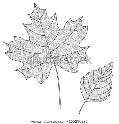 Vector Collection of Leaf Silhouettes with thin veins. Maple and birch leaves. Leaves sketch. - stock vector