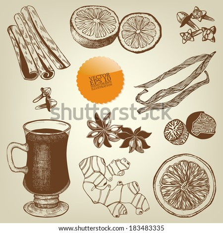 Vector collection of vintage hand drawn mulled wine and spices illustrations  - stock vector