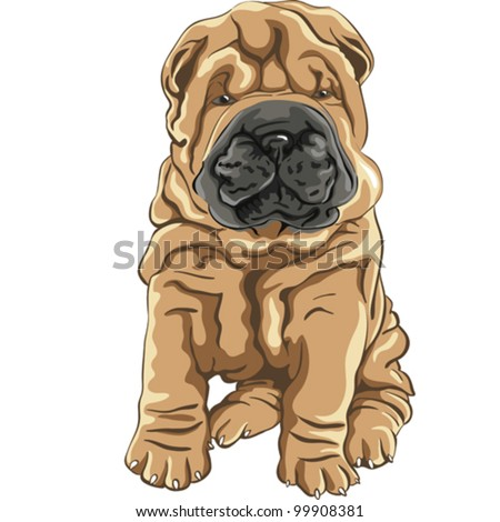 vector color sketch of a close-up dog breed Shar Pei Dog puppy sitting - stock vector