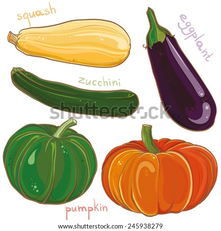 Vector colorful freehand illustration of vegetables: eggplant, pumpkin, squash and zucchini. Design set. eps 10 - stock vector