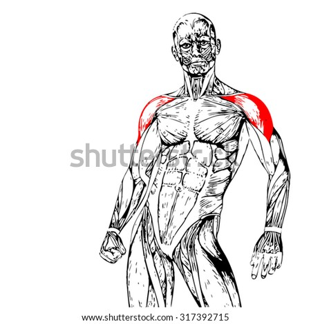 vector concept conceptual 3d chest human stock vector 319015349, Muscles