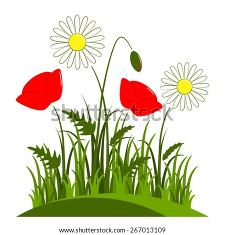 vector corn poppy and daisies in grass isolated on white background - stock vector