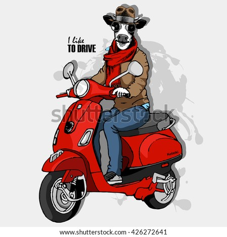 Vector cow-man in a hat. Bull  on a red moped. Hand drawn illustration of dressed cow.  - stock vector
