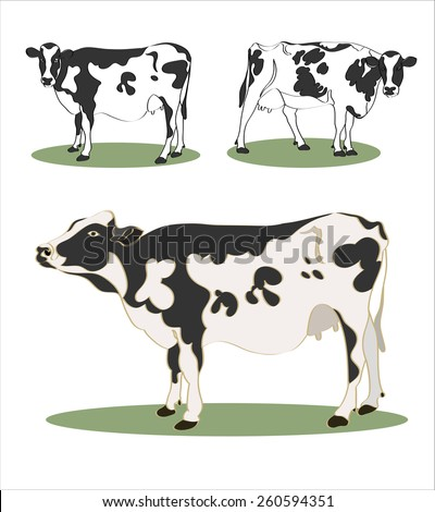 vector cows hand draw sketch set - stock vector