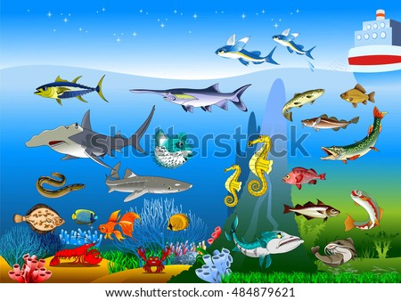 Vector cute cartoon different fishes isolated set