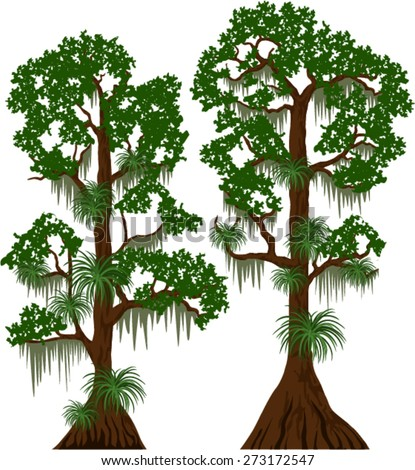 vector cypress trees spanish moss stock vector hd royalty free rh shutterstock com Louisiana Bald Cypress Tree Drawing Cypress Tree Painting