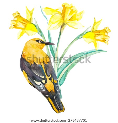 Vector daffodils and oriole isolated on white background. Exotic bird. Watercolor floral. Floral design elements. - stock vector