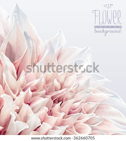 Vector dahlia flower background for Valentine's Day, wedding, events and sales - stock vector