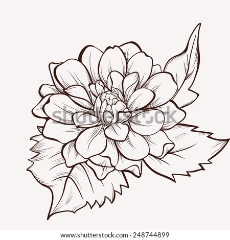 Flower Line Drawing Stock Images Royalty Free Images