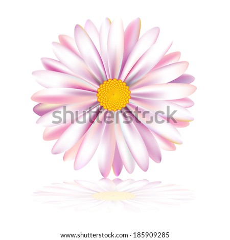 Vector daisy, chamomile flower - stock vector