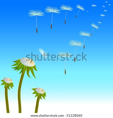 vector dandelion and a lot of flying seeds