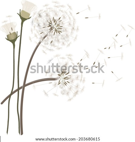 Vector dandelion background - stock vector