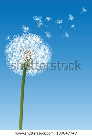 vector dandelion on blue - stock vector